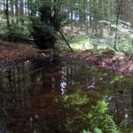 Bergener; Waldweiherchen