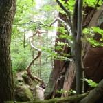 Bockfels auf dem Dahner Felsenpfad
