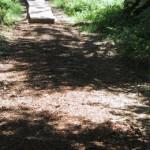 Mulch gibt Pluspunkte auf der Litermont-Gipfeltour