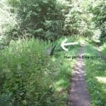 Oppig-Grät-Weg durch den Wald