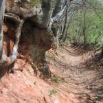 Hohlweg auf dem Schluchtenpfad bei Rissenthal