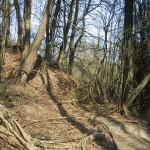 Lianen auf dem Schluchtenpfad bei Rissenthal