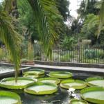 Padua mit dem botanischen Garten und Backblechen