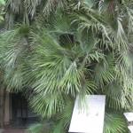 Padua mit dem botanischen Garten und Goethepalme