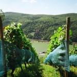 im Rhein wird gebaggert vorm Schloss Fürtstenberg