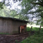 Pferdestall oberhalb Langwieden