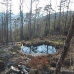 p-he-Waldsee2