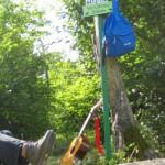 Verschnaufstamm zwischen Kronbuche und Kupferberghütte