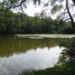 Retzbergweiher mit Seerosen