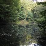 s-hb-Waldweiher