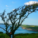 south-west-coast-path,