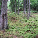 p-hl-urwald-hinweg